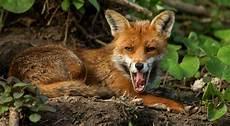 bundesregierung will wildnisgebiete f 252 r den tierschutz in