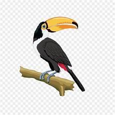 Gambar Burung Enggang Kartun Gambar Burung Wallpaper