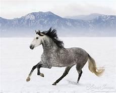 ausmalbilder pferde im schnee malvorlagen