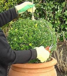 wann buchsbaum schneiden buchsbaum schablone zum einfachen formschnitt