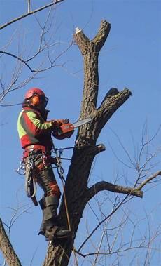 Baumpflege Oberhofer