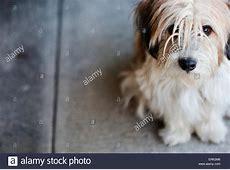 Scruffy Dog Stock Photos & Scruffy Dog Stock Images   Alamy