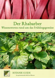 Wie Lange Kann Rhabarber Ernten - rhabarber erntezeit anbau inhaltsstoffe rhabarber