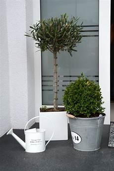 deko vor der haust 252 r olivenbaum und buchsbaum