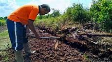 Sumarjito Pertanian Lahan Tanpa Bakar Bisa Dilakukan Di