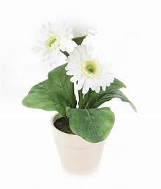 Plante D 233 Polluante D Int 233 Rieur Conseils Prix Et