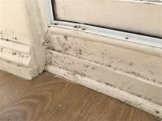 How To Deal With This Mold On The Window Frame Home