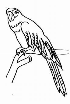 Ausmalbilder Kostenlos Zum Ausdrucken Papageien Ausmalbilder Zum Drucken Malvorlage Papagei Kostenlos 1