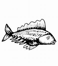 fische 00283 gratis malvorlage in fische tiere ausmalen