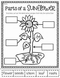 plants and seeds worksheets for kindergarten 13631 ship shape grade the may packet and freebies educational resources grade