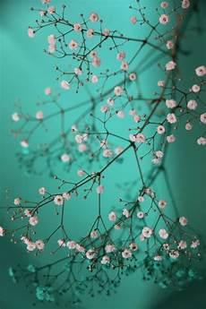 blue green flower wallpaper iphone modern free iphone wallpapers no 2 premiumcoding