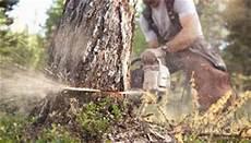 devis elagage arbre tarif elagage quel est le prix 201 lagage d arbres et