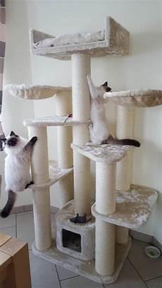 arbre a chat ikea 74664 cat tree maine coon cattreeking co uk
