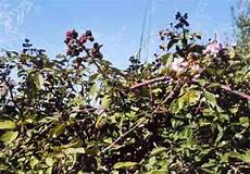 mandare dei fiori a distanza le piante dell erbario 6 i rustine 171 ponza racconta