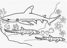 Malvorlage Hai Einfach Ausmalbilder Hai Kostenlos 920 Malvorlage Alle