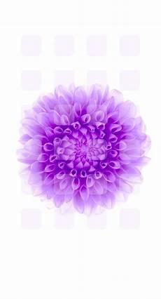 iphone purple flower wallpaper purple flower iphone wallpaper gallery