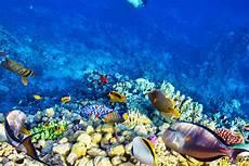 Umbul Ponggok Wisata Foto Serasa Di Dasar Laut
