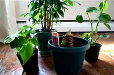 pflanzen fürs schlafzimmer feng shui feng shui zimmerpflanzen everyday feng shui