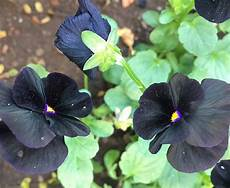 black flowers popsugar home