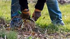 was kostet ein gärtner staudengarten putzen anleitung tipps vom g 228 rtner