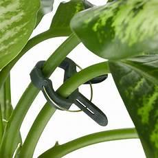 rankhilfe für zimmerpflanzen pflanzenhalter set 110 teilig rankhilfe bindedraht