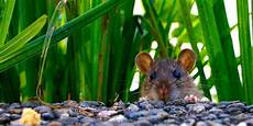 faire fuir les souris faire fuir les souris
