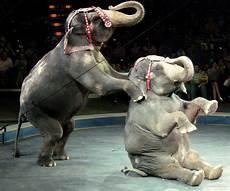 Ausmalbilder Zirkus Elefant Unravel Data Banks 15m To Improve Big Data Application