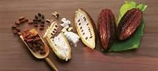 schokolade aus kleidung entfernen der kakaobohne zur schokolade klassenhomepage 5 6 252