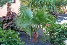 Palmen Für Den Garten - exotische pflanzen im eigenen garten freshouse