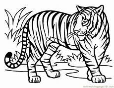 Malvorlagen Tiger Motor Tiger Coloring Page Free Tiger Coloring Pages