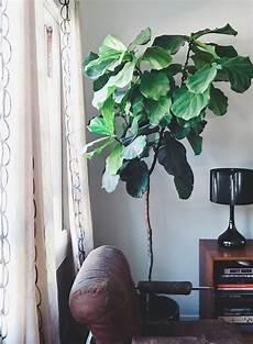 Plante Interieur Pas Cher Grande Plante Interieur Pas Cher L Atelier Des Fleurs