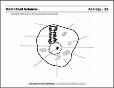 science worksheets websites 12458 zoology curriculum curriculum worksheets for zoology
