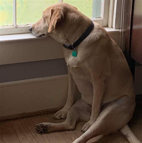 Sad Dog Meme