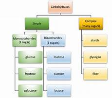 Diagram For Food That Are Carbohydrate by Types Of Carbohydrates