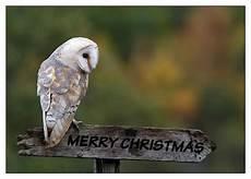 merry christmas owl countrywoman merrychristmas joyeux noel