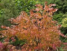 Die Schönsten Gartenbäume - ausgefallene b 228 ume 187 besondere b 228 ume f 252 r den garten