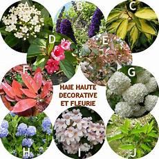 haie haute d 233 corative et fleurie en kit de 10 arbustes