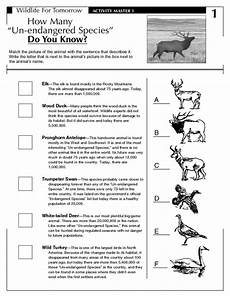 endangered animal worksheets 14298 how many un endangered species do you worksheet for 5th 9th grade lesson planet