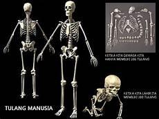 Aponema S Gambar Anatomi Kepala