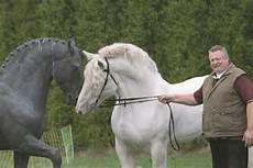 Tamme Hanken Pferd - 14 best images about tamme hanken on tvs