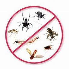 Kitchen Express Liberty Hill Tx by Frontier Pest Termite Services Pest And
