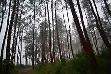 Kawasan Hutan Lindung Bisa Dimanfaatkan Untuk Jasa Wisata