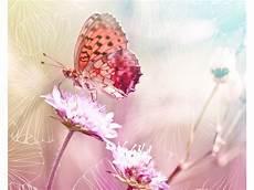Malvorlage Schmetterling Mit Blume Zauberhafter Schmetterling Auf Blume Im Bild