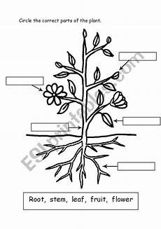 parts of plants worksheets for grade 1 13695 parts of plant esl worksheet by miss j sabir
