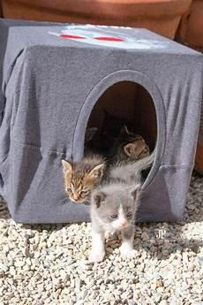 Katzenhaus Selber Bauen 40 Preisg 252 Nstige Und Praktische