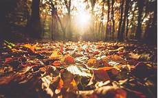 Photography Girly Fall Backgrounds fall instagram photo caption ideas travel leisure