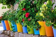 pot à fleurs pas cher pot de fleur pas cher choix de pots de fleur pas cher
