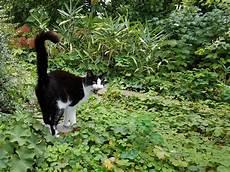 Tommys Erster Freigang Foto Bild Tiere Haustiere