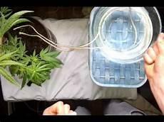 comment arroser ses plantes pendant les vacances arroser vos plantes pendant votre absence astuce