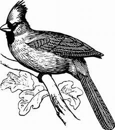 Vogel Malvorlagen Vogel Malvorlagen 123 Ausmalbilder